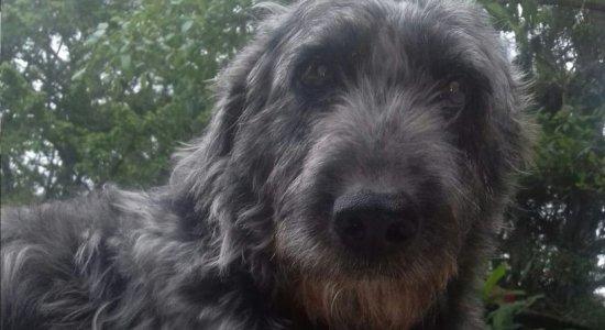 Cachorro passa 15 dias internado depois de ser picado por cobra para salvar menina
