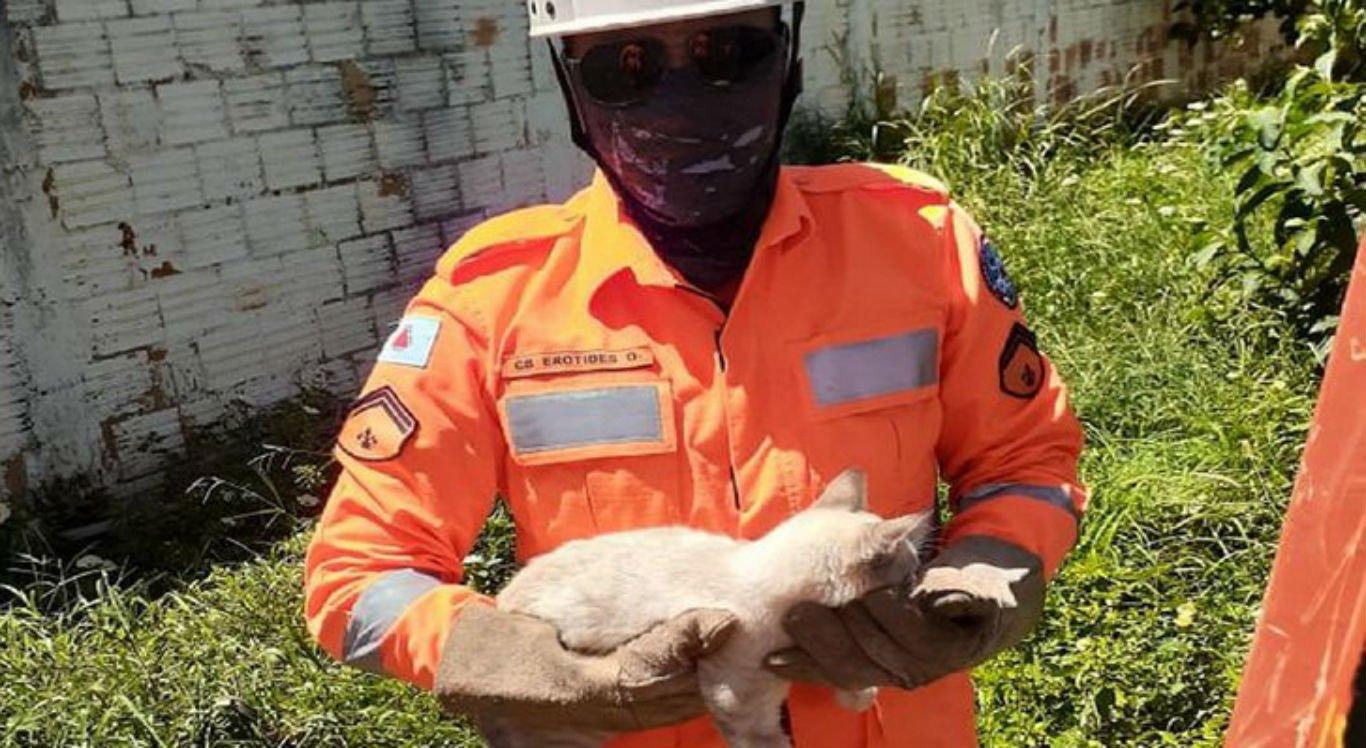 Gato é resgatado em coqueiro de 8 metros de altura