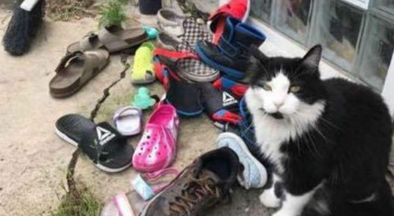 Gato já roubou mais de 80 sapatos