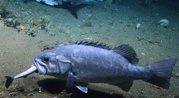 As imagens foram registradas por acaso pela Administração Oceânica e Atmosférica Nacional (NOAA)