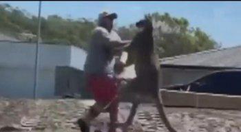 Homem é atacado por canguru