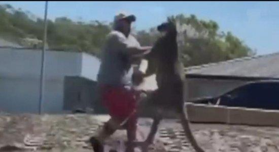 Vídeo mostra momento em que homem é nocauteado por canguru; veja