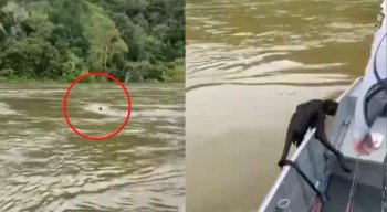 Macaco é salvo no meio da cheia de um rio