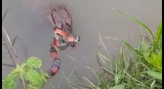 Vídeo mostra jacaré abocanhando cobra venenosa; veja