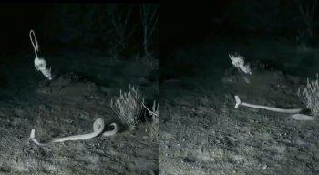 Rato escapou de ataque de cobra