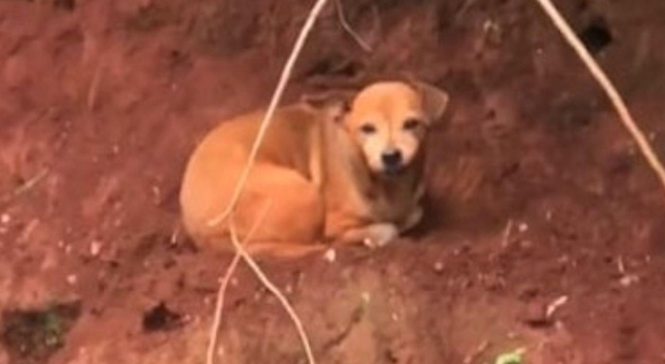Cachorro foi resgatado na beira de um rio