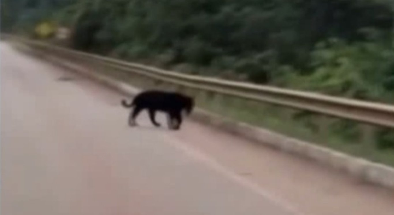 Animal atravessa estrada