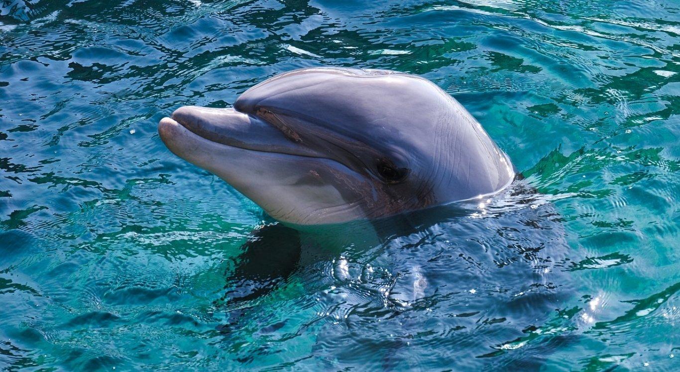 Homens são suspeitos de espancar golfinho