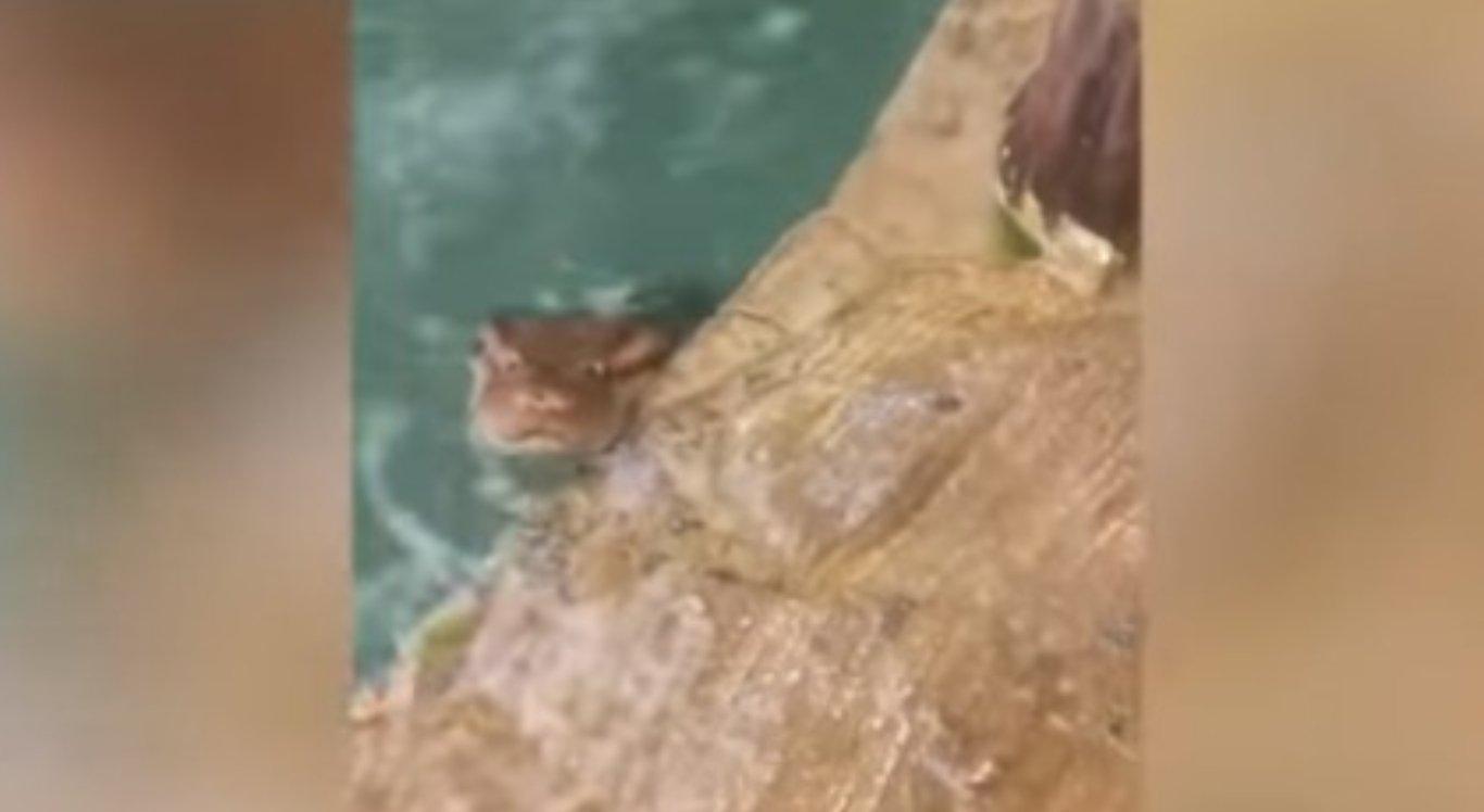 Cobra colocou a cabeça para fora da água