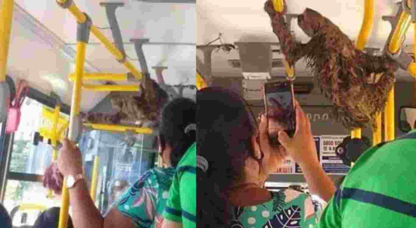 A preguiça foi resgatada no meio de uma avenida no Recife