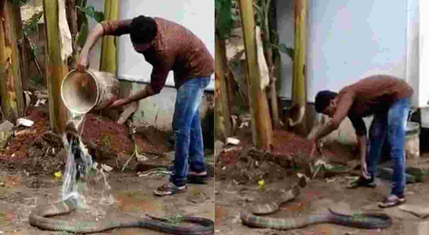 A cobra-rei recebe um banho de balde e carinho no vídeo