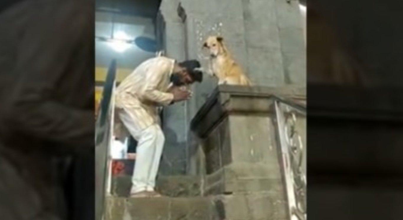 """Cachorro aparece """"abençoando"""" fiéis"""