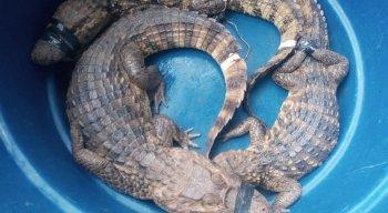 Na ocasião, os animais foram soltos na natureza em uma área de preservação, localizada na Mata Sul do Estado