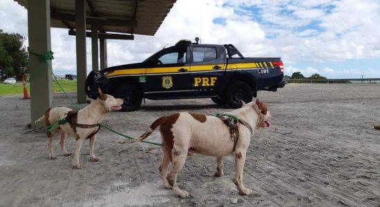 Cães são recuperados às margens de rodovia