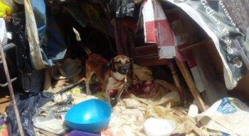 Cachorros foram levados para um abrigo de animais