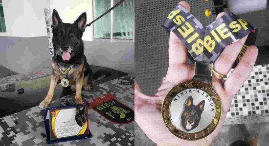 Cão farejador da Polícia Militar é 'aposentado' após nove anos