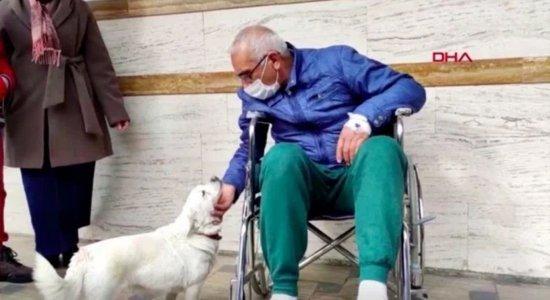 Cadela fica seis dias esperando o dono ter alta de hospital na Turquia