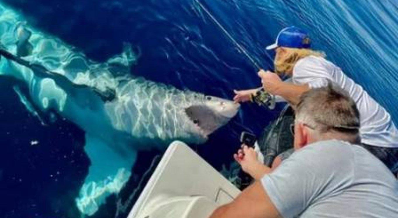 """Vídeo mostra tubarão-branco """"pedindo carinho"""" na barriga a pescadores"""
