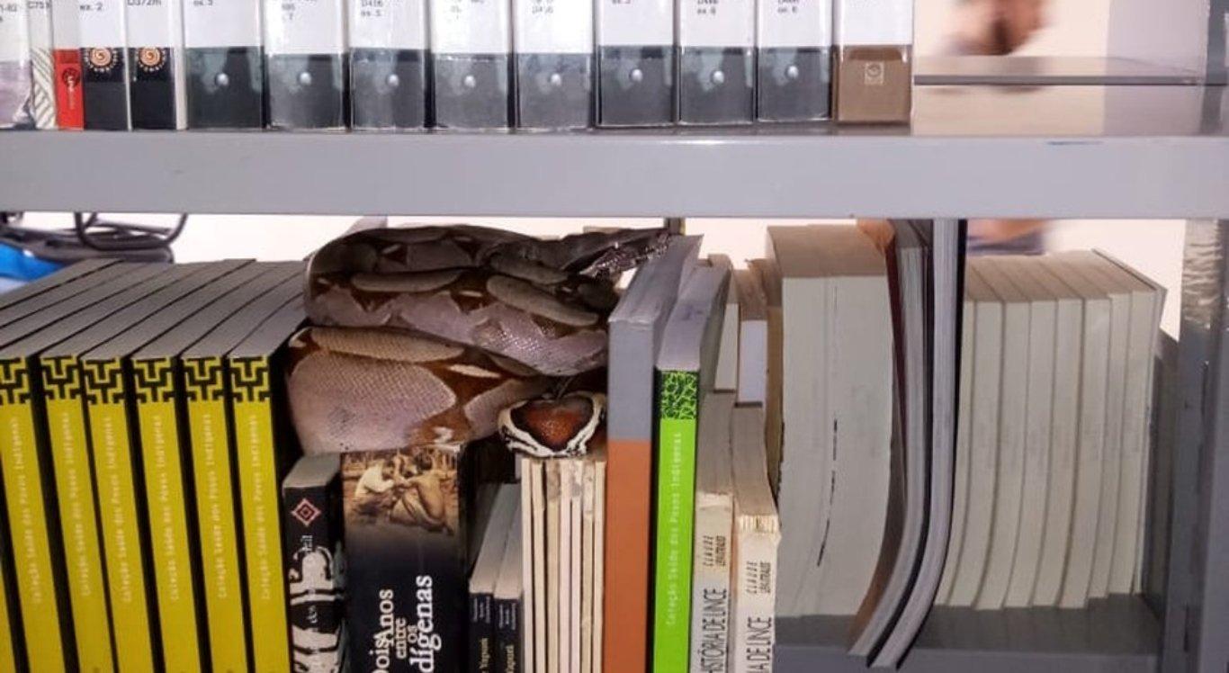 Jiboia é encontrada em cima de livros na biblioteca da UFRR