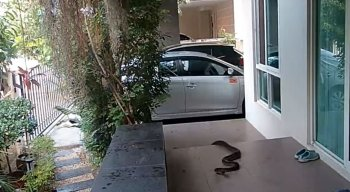 Cobra invade residência