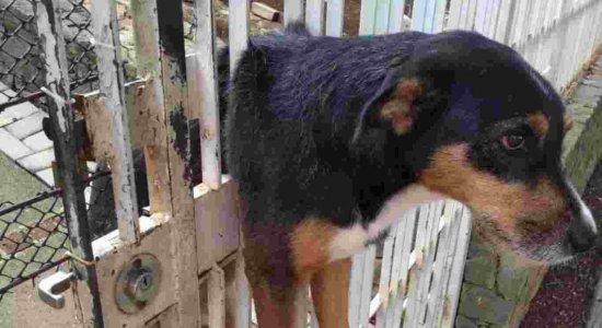 O cachorro ficou entalado no portão