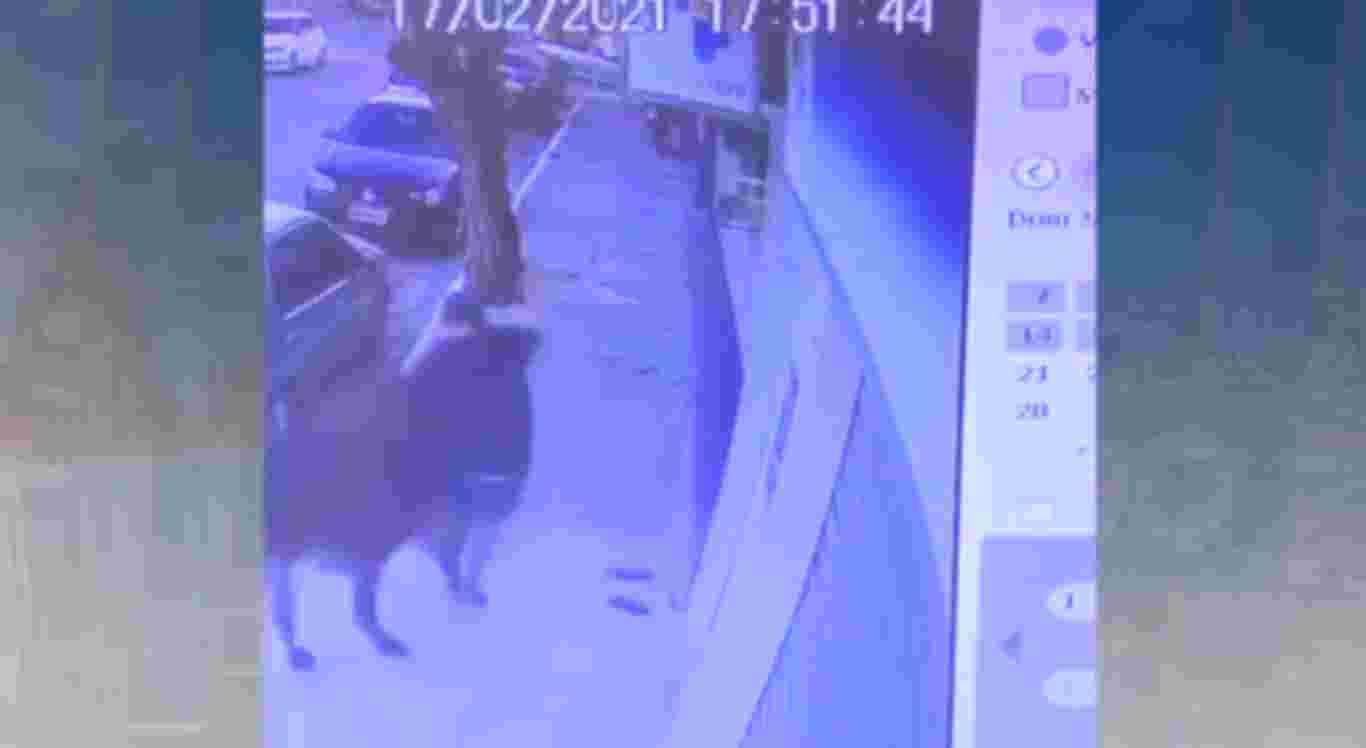 O homem foi acertado pelo boi na calçada