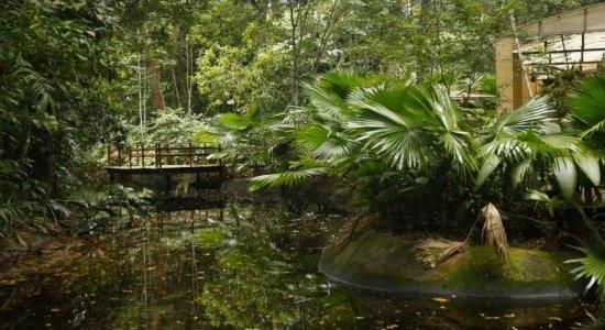 Estudo aponta que 25 mil espécies da flora só existem no Brasil