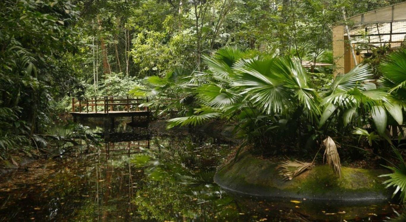 Mais de 25 mil espécies de plantas, algas e fungos nativos do Brasil são endêmicas