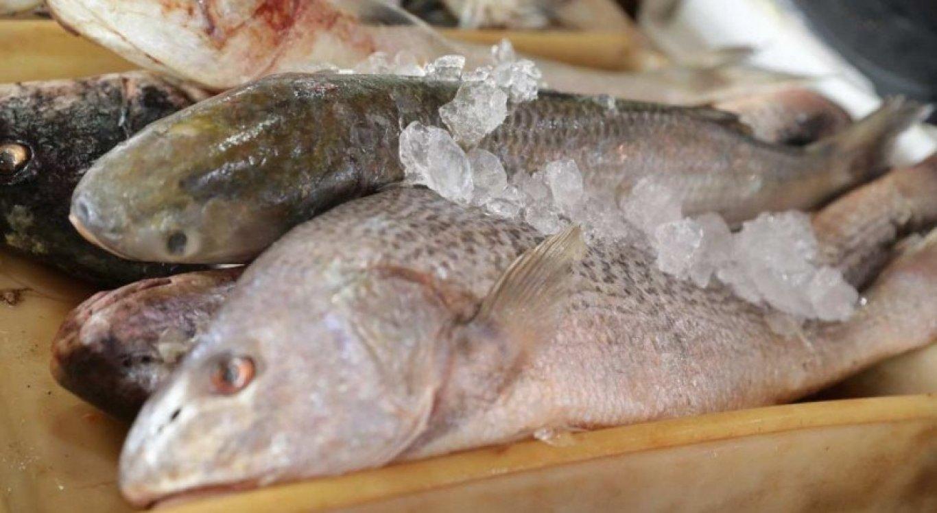 Consumidores devem verificar as condições de armazenamento e temperatura dos peixes.