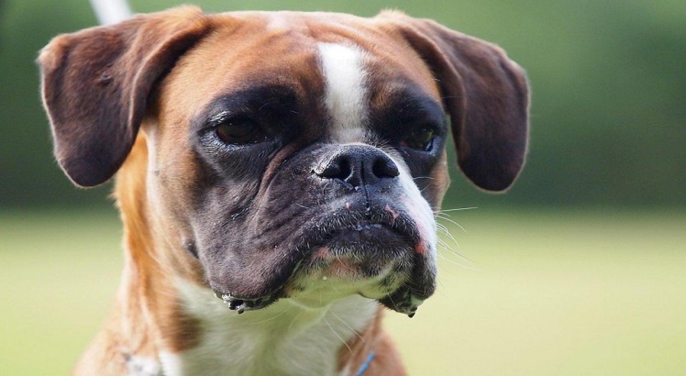 Descoberta faz parte de um estudo da UFPR que se propôs a testar mil animais de estimação, em cinco capitais do Brasil
