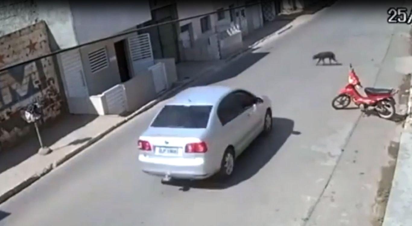 Cachorro morreu após ser atropelado por carro em Caruaru