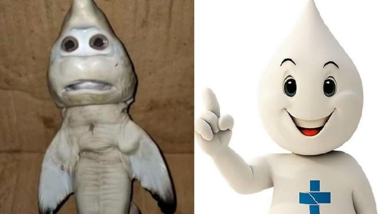 Nas redes sociais, tubarão encontrado na Indonésia foi comparado o Zé Gotinha.