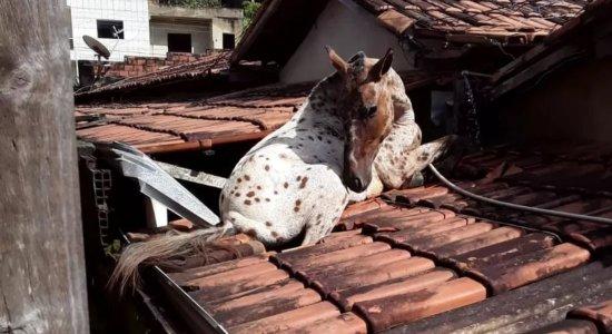 Vídeo: Cavalo fica preso no telhado de prefeitura