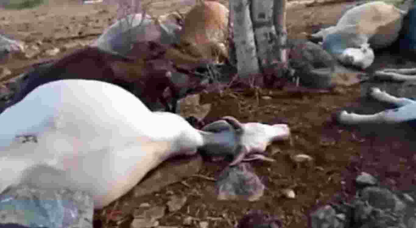Os animais morreram atingidos por raio em Cumaru