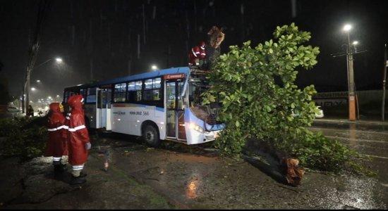 Árvore cai sobre ônibus enquanto ele passava pela Avenida Mascarenhas de Moraes