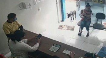 Cachorro machucado pede ajuda em clínica veterinária no Ceará