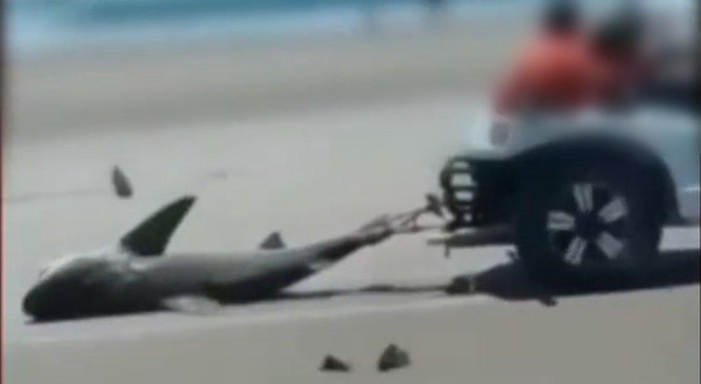 Tubarão foi puxado por um buggy