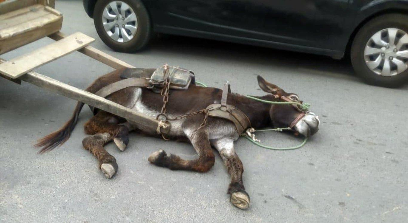 O caso aconteceu em Santa Cruz do Capibaribe