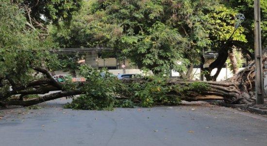 Queda de árvore bloqueia rua e complica trânsito no bairro de Santo Amaro