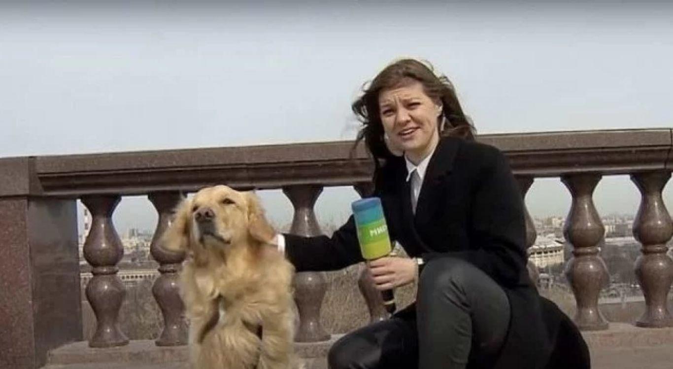 Repórter russa é surpreendida por cachorro durante entrada ao vivo em telejornal.