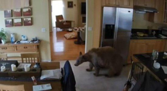 Urso invade casa e é expulso por cachorros