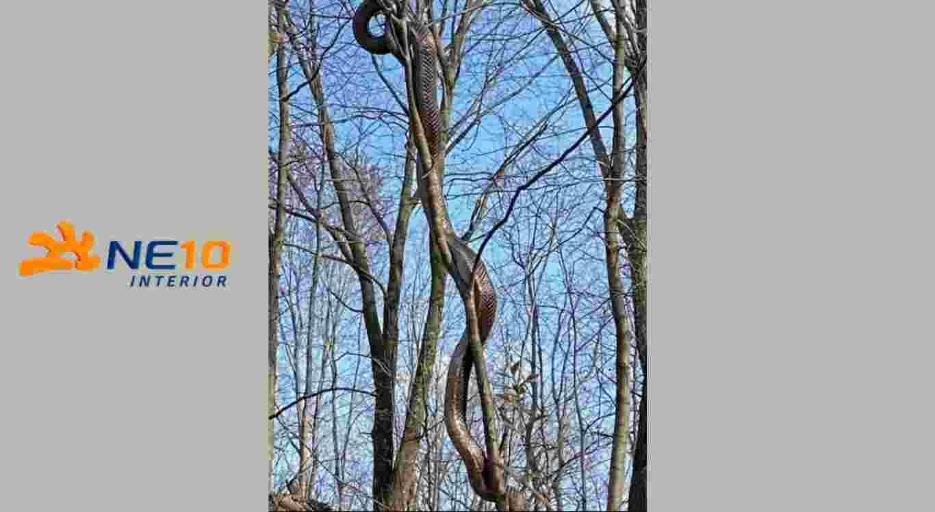 Cobra de mais de 2 metros é vista em cima de árvore em parque