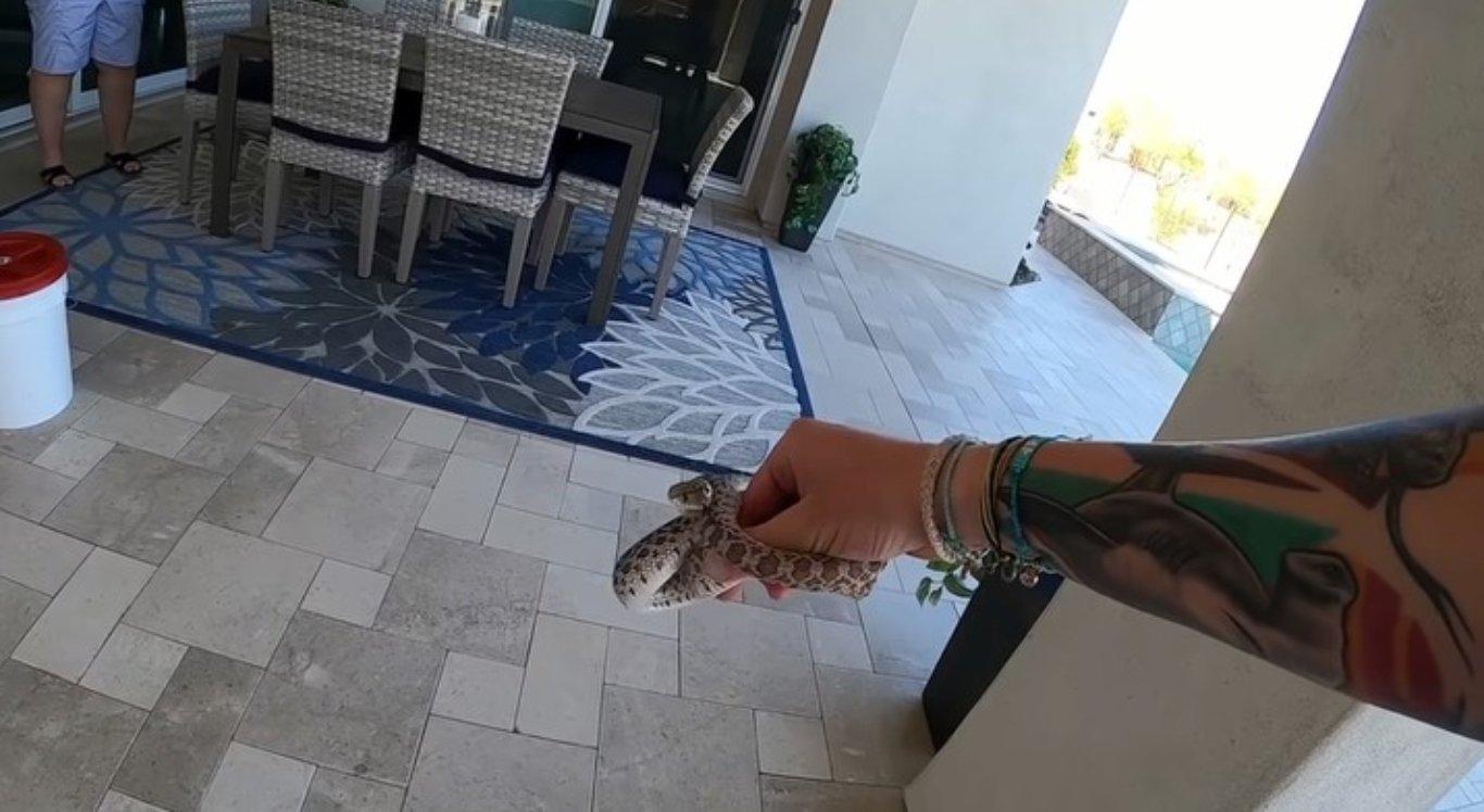 Cobra é resgatada
