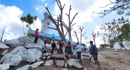 No Agreste, árvore jorra água e católicos acreditam ser milagre; veja vídeo