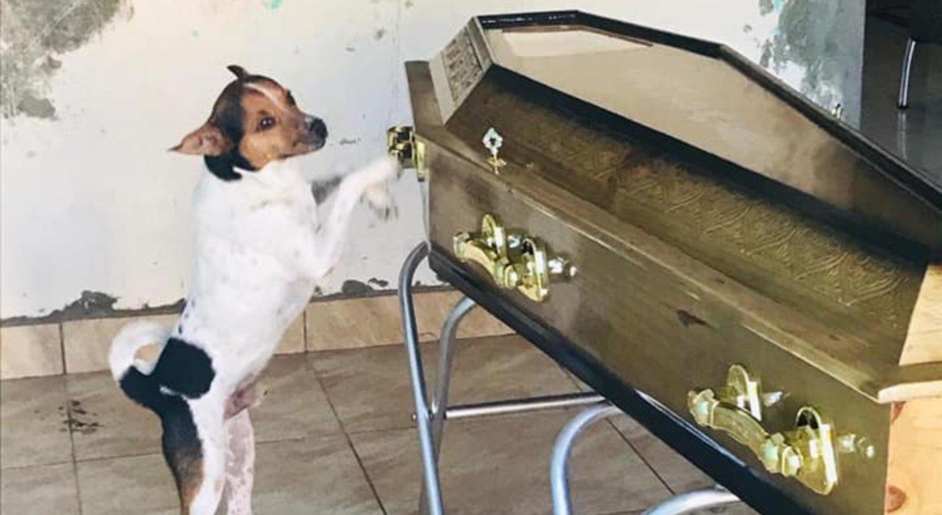 Cachorro chora ao lado do caixão da dona durante velório