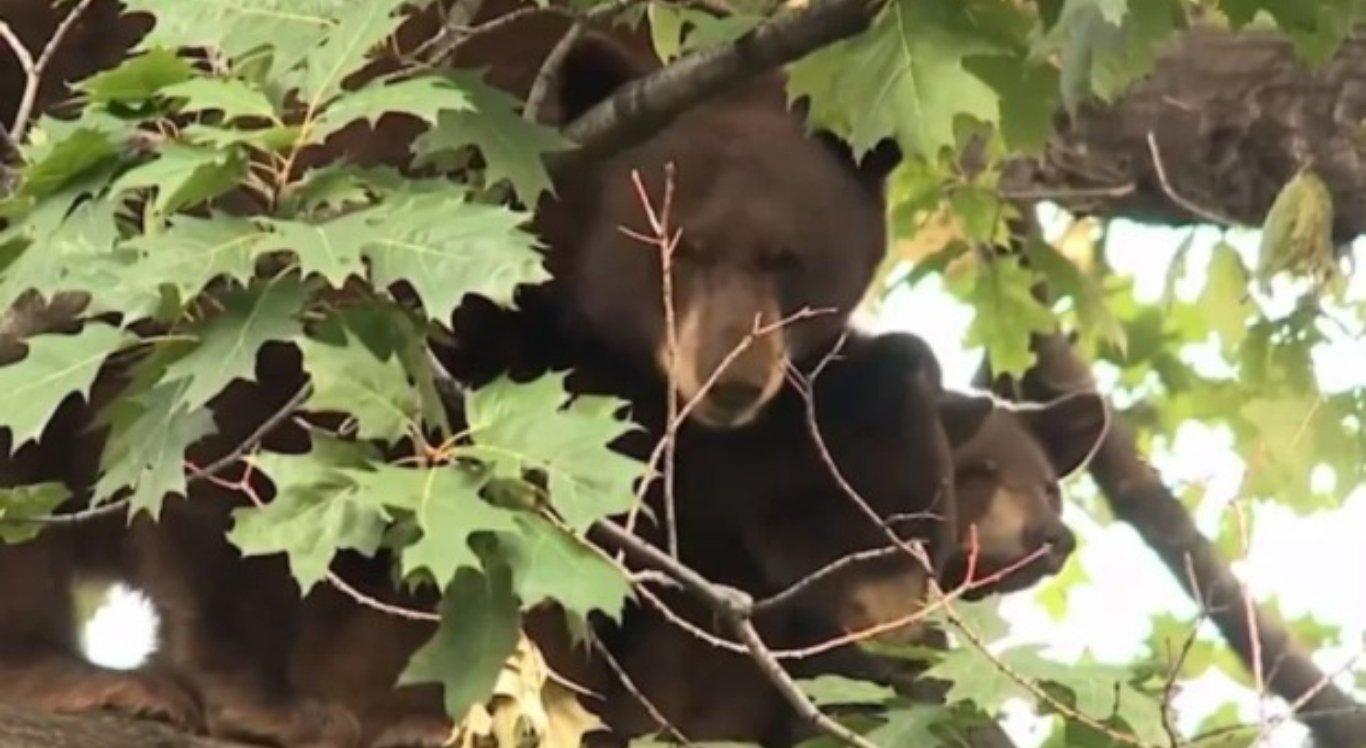 Restos mortais de mulher desaparecida são achados dentro de ursos sacrificados