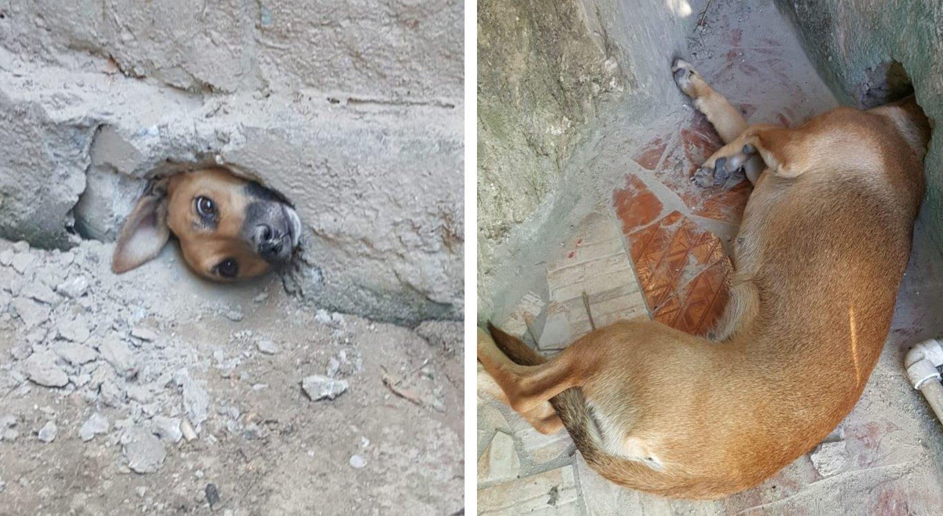 Cachorrinha ficou presa em muro ao tentar espiar a casa da vizinha