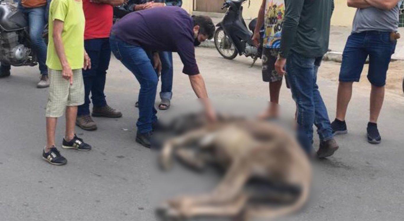 O animal caiu na rua com o peso da carga em Santa Cruz