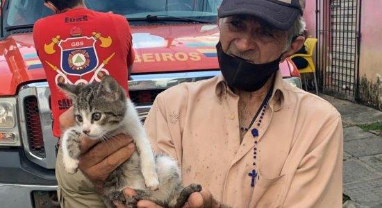 O gato foi resgatado de dentro do buraco da calçada