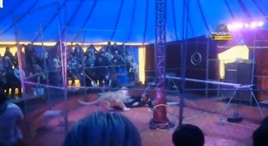 o domador foi atacado no circo na Rússia